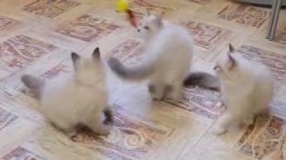 Котята из Кузькиного дома