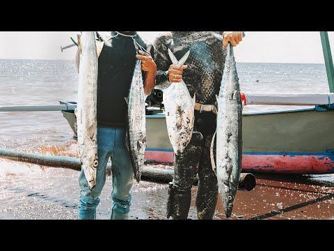 Understanding Spearfishing In Bali