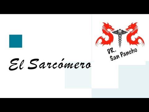 el-sarcómero