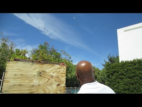 Mike Tyson Fly's His Pigeons at Home - Rare
