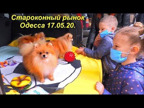 Староконный рынок РАБОТАЕТ. Одесса. 17 мая 2020. Собачий ряд.