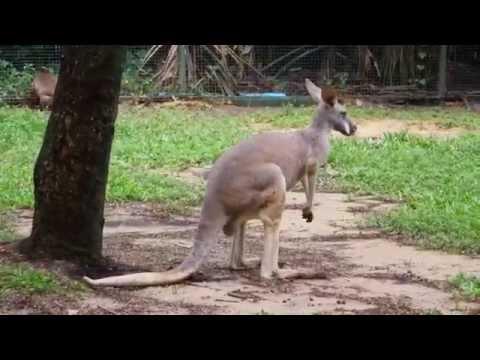Zoo Safari World Thailand, Bangkok,(Зоопарк Сафари мира)