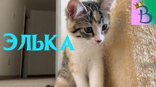 Кошка Элька. Новый домик для котенка. Смешная кошечка. #детскоевидео #кошкаэлька #смешныекотики