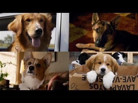 A Dog's Purpose: From Best-Selling Book to the Big Screen