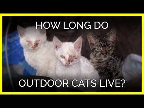 How Long Do Outdoor Cats Live?