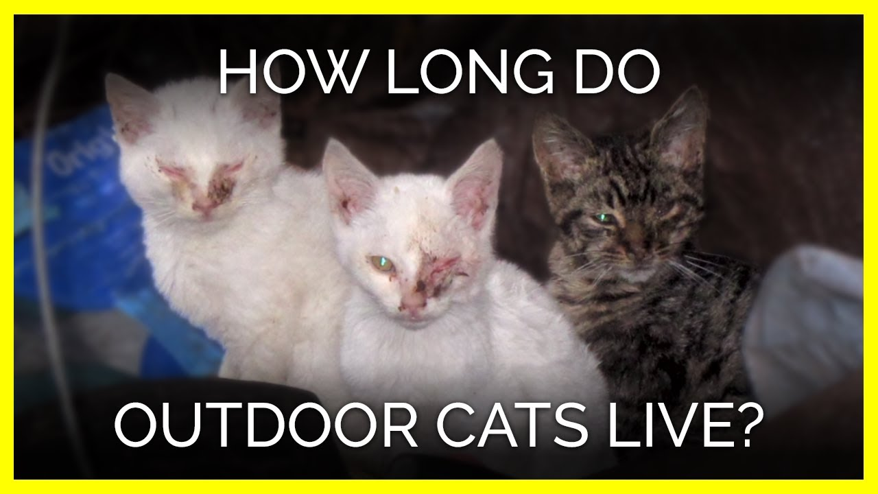 How many cats live and how to care for them in old age