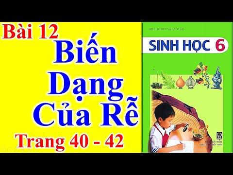 Sinh Học Lớp 6 Bài 12 – Biến Dạng Của Rễ - Trang 40 - 42