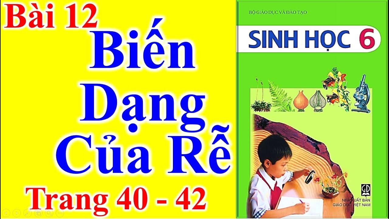 Sinh Học Lớp 6 Bài 12 – Biến Dạng Của Rễ – Trang 40 – 42