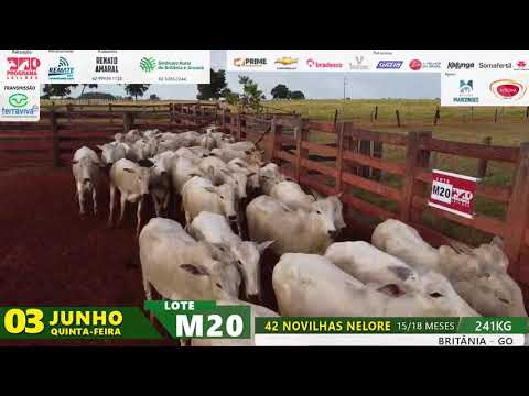 LOTE M20