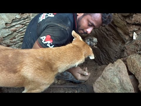 Mother Dog Helps Rescuers Dig For Her Buried Puppies