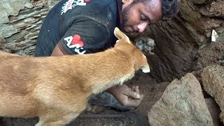 Mother dog helps rescuers dig for her buried puppies.