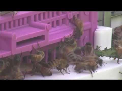 Bees N Rhubarb
