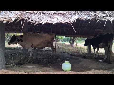 A Weekend Farm Stay Near Bangalore