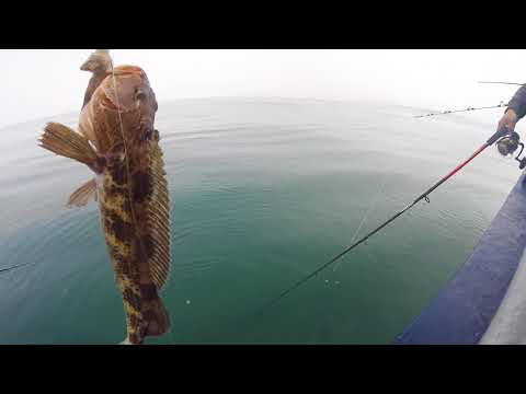 Morro Bay Fishing on the Avenger for Lingcod, Vermilion, and other Rockfishs.