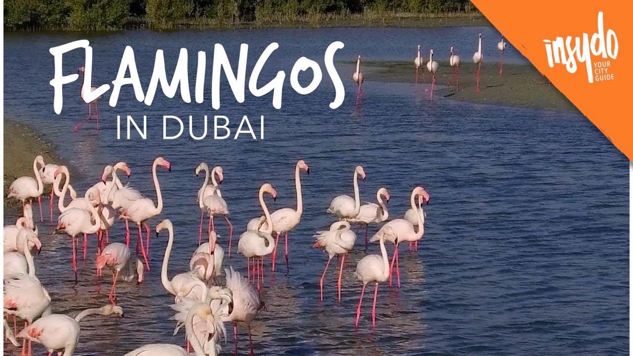 Ras Al Khor Wildlife Santuary: Flamingos in Dubai
