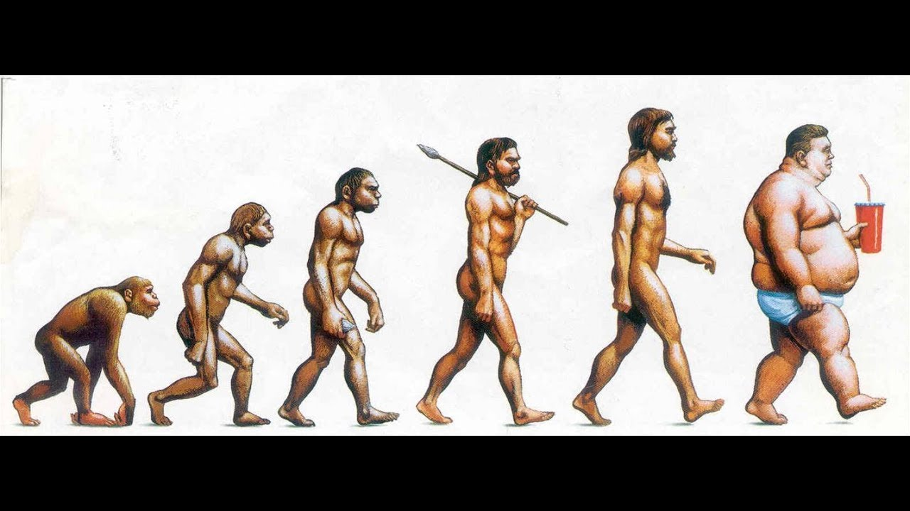 Image result for эволюция человека