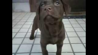 生後3ヶ月くらいです。 子犬のときはかわいかったのに・・・