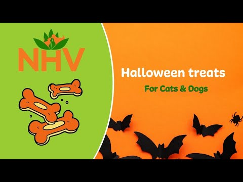 Halloween treat fro cats and dogs