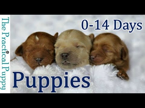 Newborn Puppies: Birth To 2 Weeks