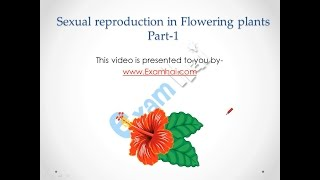 Sexual Reproduction in flowering plants Part 1 Class 12th Biology CBSE Hindi