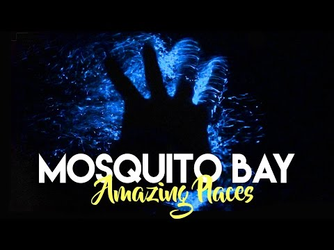 THE GLOWING BIO BAY IN VIEQUES PUERTO RICO