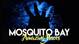 One of Mike Corey's most viewed videos: THE GLOWING BIO BAY IN VIEQUES PUERTO RICO