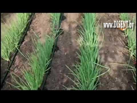 Капельный полив в Минске, Беларусь - YouTube