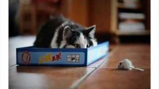 Cats~Cats~Cats