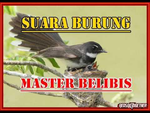 SUARA BURUNG MASTER BELIBIS