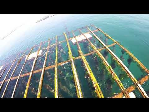 牡蠣浮棚下的精彩世界 Taiwan Tainan