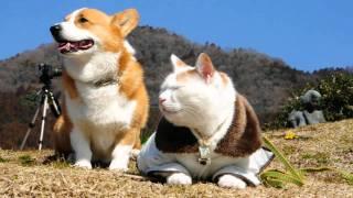 まるで記念撮影!カメラの前でかしこまるコーギーと猫がカワイイ!