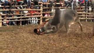 Jocheo de toros en la Ichapakene Piesta en San Ignacio de Moxos del BENI