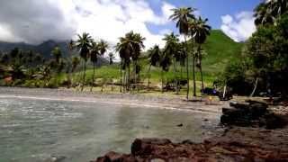TAHITI : Échouage d'un cachalot nain à Hakamoui - UA POU