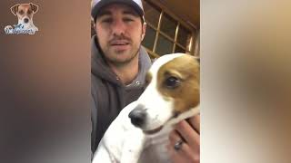 Dogs Reaction To Vet Compilation 😂 Funny \u0026 Cute Reaction