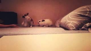 Как злятся кролики(Кролики играют., 2015-12-14T17:01:59.000Z)