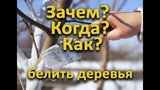 Зачем, когда и как белить деревья?