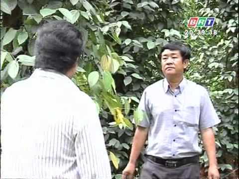 Khuyến nông 14 1 2012 Biện pháp phòng trừ rệp sáp và tuyết trùng hại hồ tiêu