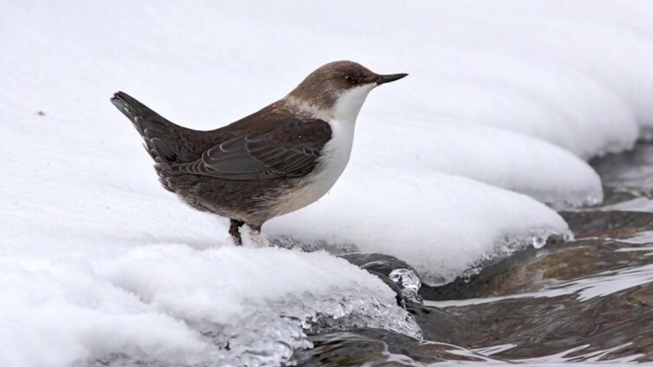 Фото птиц в контражур