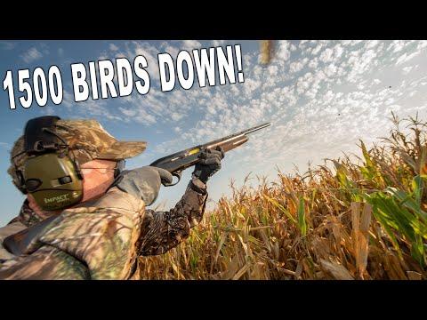 Argentina Dove Hunt SHOT REEL!