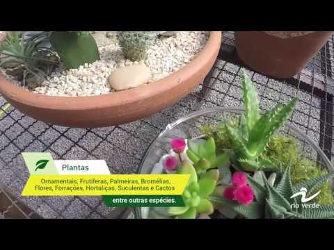 O Horto Mais Completo Do RJ - Plantas, Vasos, Execução De Jardim, Materiais E Etc...