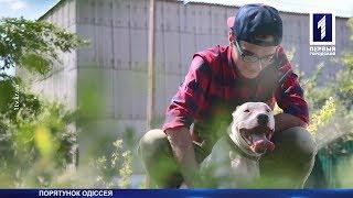 Порятунок сліпого собаки Одіссея