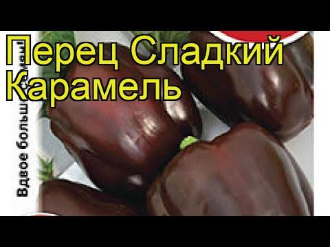 Перец сладкий Карамель. Краткий обзор, описание характеристик, где купить семена cápsicum ánnuum