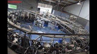 Traite des vaches en carrousel roto BouMatic 34 places