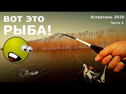 ВОТ это РЫБА! Рыбалка в Астрахани 2020. Часть 2
