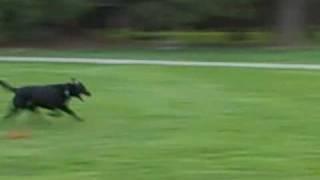 Seattle wonder Dog breaks world record 100 yard dash