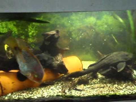 aquarium mit led beleuchtung youtube. Black Bedroom Furniture Sets. Home Design Ideas