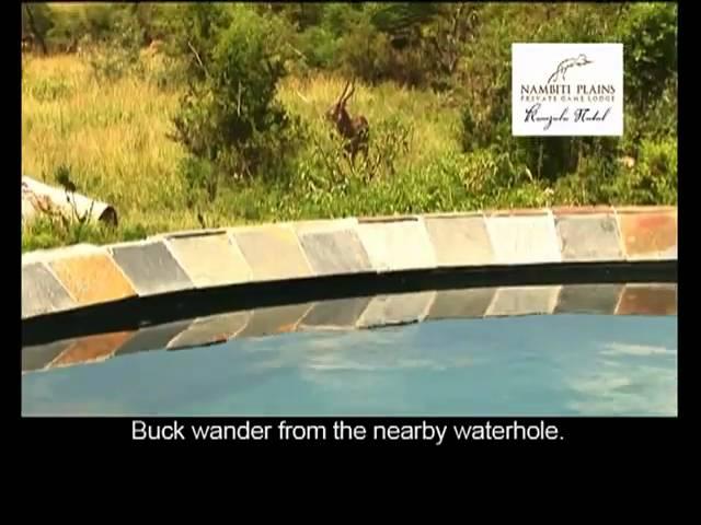 Video over de Nambiti Plains Safari Lodge in Zuid Afrika