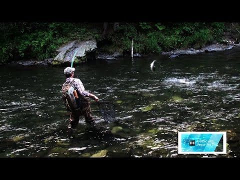 Russian River Alaska Salmon Fishing