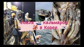 Ловля кальмара в Корее