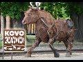 Náhled - Kovozoo - Exkurce / Videoprůvodce | Tipy na Víkend